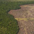 Avskogingen i Brasil eksploderte i 2016