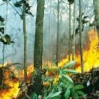 Brann i regnskog