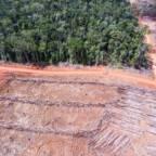 Palmeoljeindustrien angriper Asias siste store regnskog