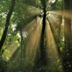 Indonesia's most powerful palm oil company joins push for forest protection