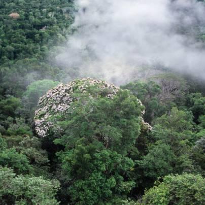 Tett regnskog under tyne tåkelag.
