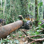 ​DR Congo threatens to open its rainforest to new industrial loggers