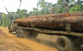 En fullastet tømmerbil kjører på en rødbrun regnskogvei.