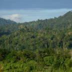 Nå er denne regnskogen reddet