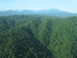 Flyfoto av regnskog i Papua Ny-Guinea. Tett regnskog så langt øyet kan se.
