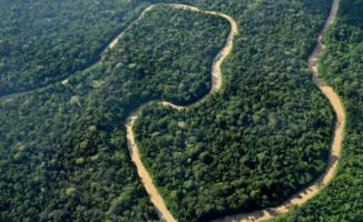 Regnskog i Peru reddet fra oljeutvinning