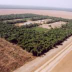 Liten lapp med regnskog omringet av åkrer