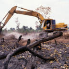 World's largest sovereign wealth fund drops companies over deforestation