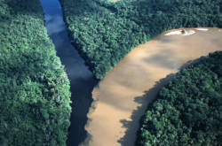 Flyfoto av to elver i regnskogen som møtes