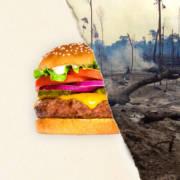 Bilde av en hamburger på den venstre siden av bildet og ødelagt regnskog på den høyre siden.