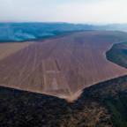 How investors can manage deforestation risk