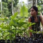 En kvinne dyrker planter i en hage.