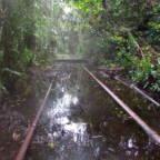 Oljesøl ved rørledninger i regnskog