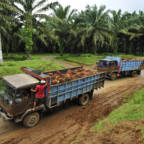 Large palm oil producer announces strong forest conservation policy