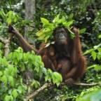 – Redder ikke klimaet uten å redde regnskogen
