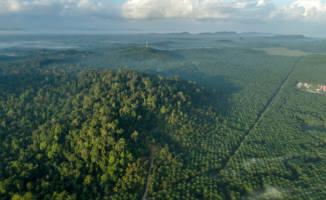 Oljefondet sitter med nøkkelen til å redde regnskogen