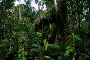 Photo of the forest the missionaries hunted in