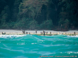 The isolated tribe Sentinelse on the shore