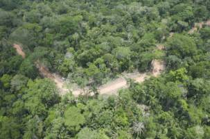 Illegal logging road