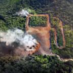 EU faser ut palmeolje i drivstoff – men ikke før 2030