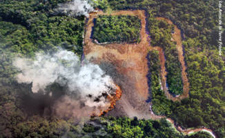 Indonesian civil society pleads with the EU to phase out palm oil-based biofuels