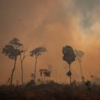 Norwegian salmon company excludes Brazilian soy due to deforestation risk