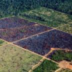 Hogget skog i Brasil.