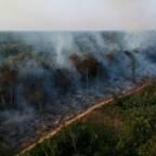 Nok et dramatisk år for regnskogen i Brasil