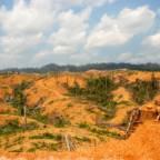 Mange nedhogde trær og ødeleggelse