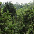 Tett regnskog i Indonesia