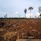 Nedhogd skog i Malaysia.