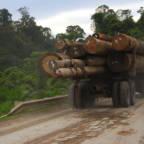 Lastebil som frakter tømmer