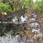 Oljesøl i elv i regnskog