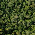Mer regnskog i de nye partiprogrammene