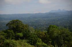 Regnskog fra Papa Ny-Guinea