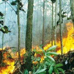 Forest fire in Indonesia
