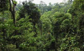 Gjennombrudd for regnskogen i Indonesia
