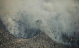 Høyeste avskoging i Amazonas på over ti år
