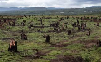 Hogst og avskoging er en hovedårsak til artsutryddelse