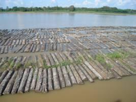 Et titall tømmerstokker flyter langs en elv i Brasil