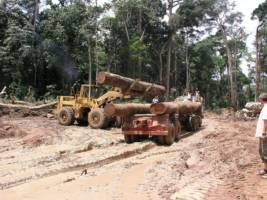 En bulldoser laster tømmer på en tømmerbil i skogen i Kongo.
