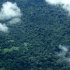 Regnskogen i Amazonas sett fra luften