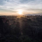 Kun en tredjedel av verdens regnskoger er intakte