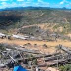 Flyfoto av avskoget område som skal bli palmeoljeplantasje