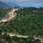 Rule changes put halt to Norway's use of palm oil biodiesel