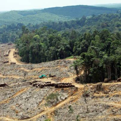 Flufoto som viser et tydelig skille mellom tett regnskog og nedhogd skog.
