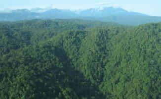 Vest-Papua vil beskytte all regnskog i provinsen
