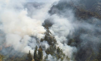 Covid-19 is hampering forest fire prevention in Indonesia