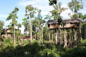 Trehus bygd høyt oppe i tretoppene av regnskogtrær på øya Papua.