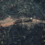 Brazilian Amazon: deforestation still out of control